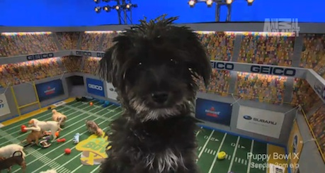 Rudy, the star of Puppy Bowl X.